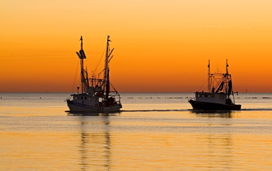 Shrimp boats off the coast of Hilton Head Island